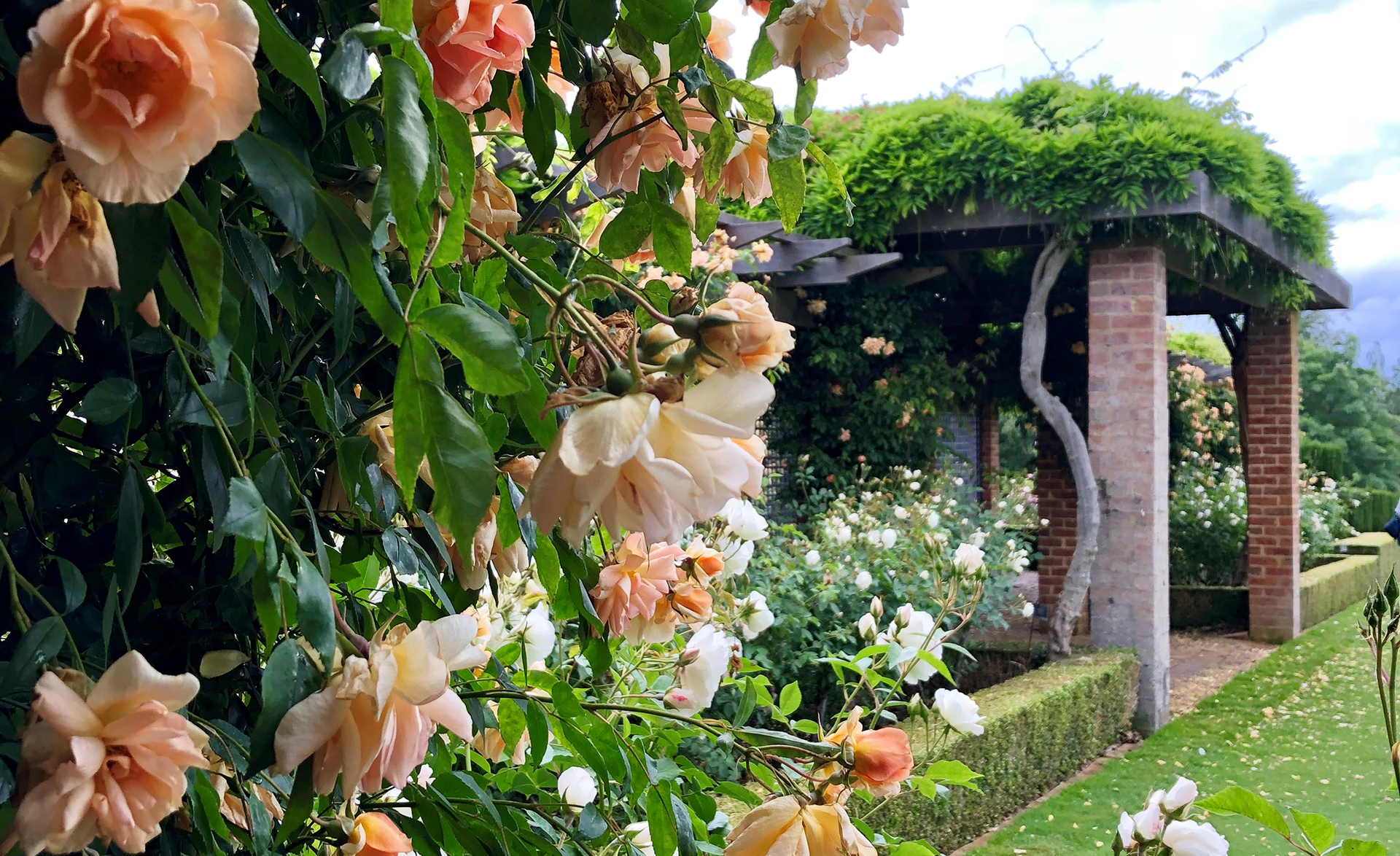 Rose Garden at Mayfield in Oberon, NSW